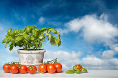 Fresh Basil and Tomatoes before a blue Sky Royalty Free Stock Photos