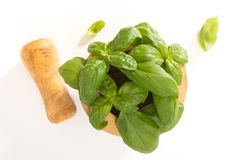 Fresh basil in  wooden mortar with pestle, on withe background. Stock Photography