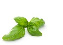 Fresh basillicum. Basil leaves isolated on white Stock Image