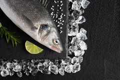 Fresh bass fish on ice on a black stone table. Top view Stock Image