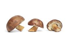 Fresh Bay Bolete mushrooms Royalty Free Stock Image