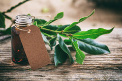 Fresh bay laurel and oil on wooden background Royalty Free Stock Images