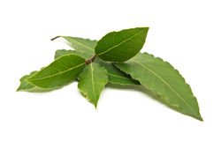 Fresh Bay Leaves branch isolated on white background Royalty Free Stock Images