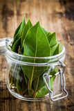 Fresh bay leaves in a glass jar on a wooden background Stock Photography