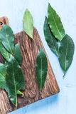 Fresh bay leaves herb on pastel wooden table Royalty Free Stock Photo