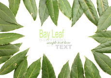 Fresh Bay Leaves Royalty Free Stock Photos