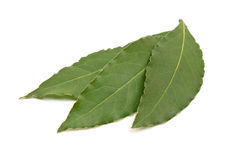 Fresh Bay Leaves isolated on white background Royalty Free Stock Photo