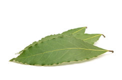 Fresh Bay Leaves isolated on white background Stock Images