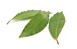 Fresh Bay Leaves isolated on white background Royalty Free Stock Images
