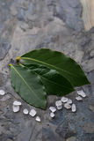 Fresh bay leaves and salt Royalty Free Stock Image