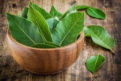 Fresh bay leaves in a wooden bowl on a wooden background Royalty Free Stock Photography