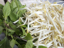 Fresh bean sprout and sweet basil. The picture of fresh bean sprout and sweet basil Royalty Free Stock Photo