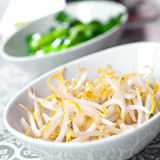 Fresh bean sprouts and steamed baby bokchoi Royalty Free Stock Images