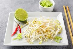 Bean sprouts in white plate. Fresh bean sprouts on white square plate and chopsticks. Concept of healthy foods, vegetarian food Stock Photography