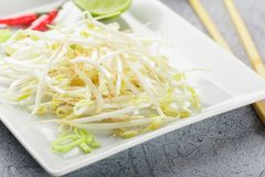 Bean sprouts in white plate. Fresh bean sprouts on white square plate and chopsticks. Concept of healthy foods, vegetarian food Royalty Free Stock Images