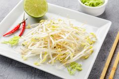 Bean sprouts in white plate. Royalty Free Stock Images