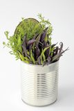 Fresh beans. Blue and yellow beans, freshly picked, and with winter savory in a tin can Royalty Free Stock Photos