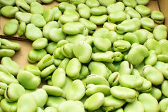 Fresh beans Royalty Free Stock Photo