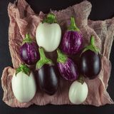 Fresh, beautiful colorful eggplants decorated on plates and napkin. Studio shoot can be used as background Royalty Free Stock Photos