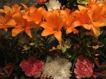 Fresh and beautiful orange flowers decoration stock photos