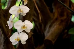Orchids growing with forest. Royalty Free Stock Image