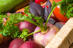 Fresh beautiful vegetables. Royalty Free Stock Photo