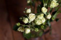 Fresh beautiful white little roses. Indoor Stock Image