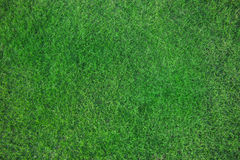 Fresh bed of green grass Royalty Free Stock Photo
