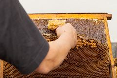 Fresh bee honey from honeycomb Stock Images