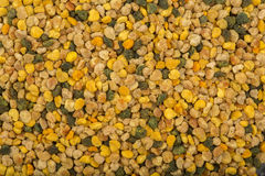 Fresh bee pollen Royalty Free Stock Photo