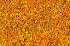 Fresh bee pollen. Fresh colorful bee pollen, which brought in bees stock photography