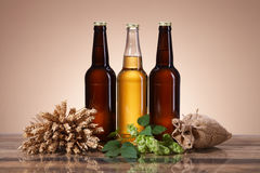Fresh beer and brewing ingredients Royalty Free Stock Photos