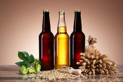 Fresh beer and brewing ingredients Royalty Free Stock Photo