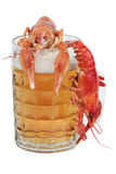 Fresh beer and crayfish Stock Photos
