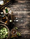 Fresh beer with green hops and malt. On a wooden background stock image