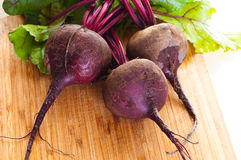Fresh beet. Stock Photos