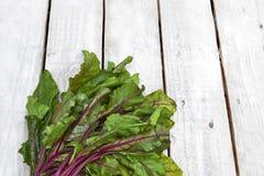 Fresh beet leaf bunch Royalty Free Stock Image