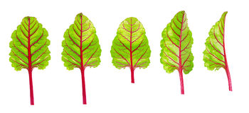 Fresh beet leaf set isolated Stock Image