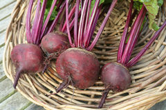 Fresh beetroot on basket Stock Photo