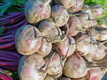 Fresh Beetroot Bulbs Royalty Free Stock Photography