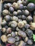 Fresh Beetroot Bulbs Royalty Free Stock Photos