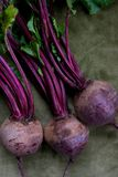 Fresh beetroot. Fresh red beetroot on green background Stock Image