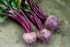 Fresh beetroot. On green background Royalty Free Stock Images