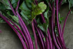 Fresh beetroot leaves. Color details Stock Photography