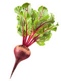 Fresh beetroot Stock Photography