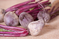 Fresh beetroots. Fresh picked beetroots on the hessian cloth Royalty Free Stock Photo