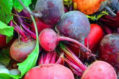 Bunches of Beets Stock Photography