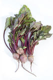 Fresh beets Royalty Free Stock Photos