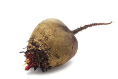 Fresh beets Royalty Free Stock Photography