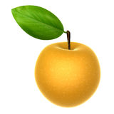 Fresh Beige color Asian Pear. Foods and Dishes Series. Stock Photography
